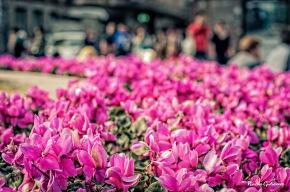 140414-DSC_9083 Flickr-2
