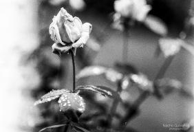 161122-c014-kentmere-100-01-flickr
